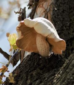 close-up-of-mushroom-in-tree