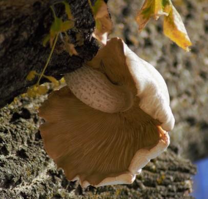 close-up-of-mushroom