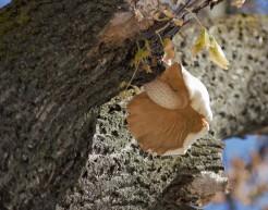 smaller-mushroom-in-tree